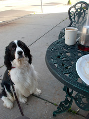 Cooper and Breakfast at Zina's (Anitab) Tags: coffee breakfast dance cooper springer leash ambler zinas englishspringerspaniel poka butleravenue saffires saffirespokadance