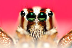 Spider Families (Alan'sWorkshop) Tags: closetonature supershot abigfave rubyphotographer theenchantedcarousel
