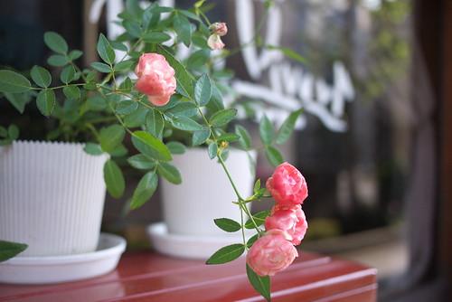喫茶店薔薇