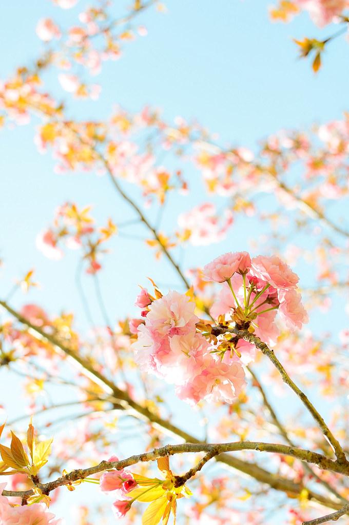 spring2010_51-2