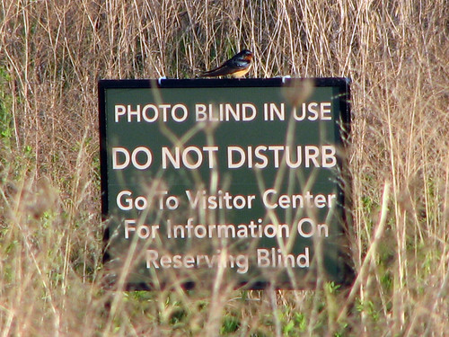 Photo Blind