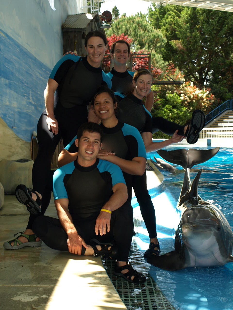 Six Flags Discovery Team - Dolphin