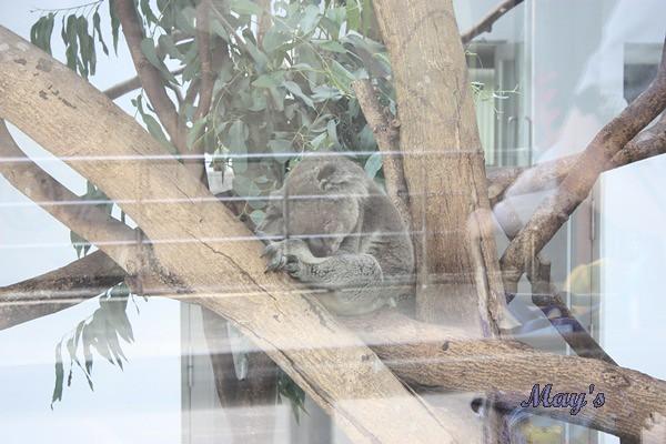 990522台北動物園 107