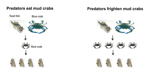 gulf oyster reef food web