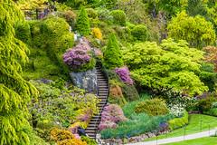 BUTCHART GARDENS (Mononc' Paul) Tags: flowers fleurs garden jardin victoria butchartgarden eos30d favoritegarden