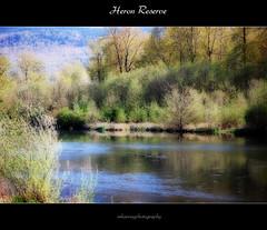 Heron Reserve (bluejay 2006) Tags: trees lake canada green nature scenery scenic saturday legacy blueribbonwinner coth beautifulbritishcolumbia nikond40 bluejay2006 dragondaggerphoto mharveyphotography