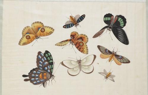 Butterfly Album k