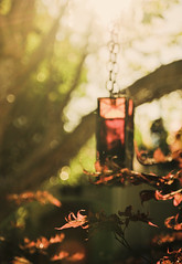 ~crimson & clover~ (Rootedinstyle) Tags: red japanesemaple flare goldenhour vintageglass greenlightring
