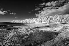 Acadia National Park IR-6088 (Michael Pancier Photography) Tags: autumn blackwhite maine mountdesertisland acadianationalpark lifepixel infraredbw michaelpancier michaelpancierphotography srcohiba wwwmichaelpancierphotographycom