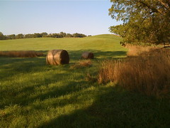 Green Field with Hay Bales (marylea) Tags: morning autumn green fall nature field rural corn quiet walk michigan farm country hill harvest calm september fields hay portfolio bales bale 2009 iphone harvested sep18