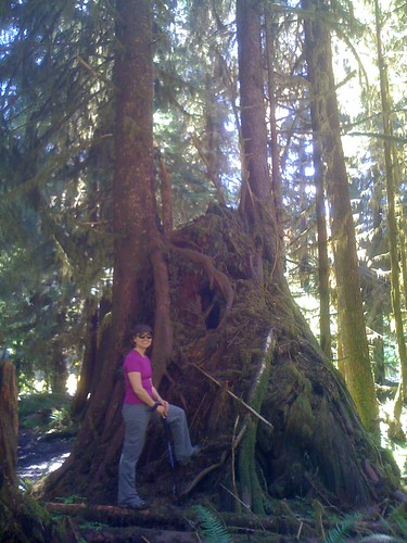 in the Hoh Rain Forest