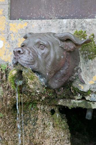 marinni | Собачки и фонтаны