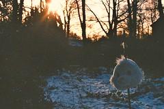 (emilyharriet) Tags: bear trees snow film head olympus om10 ourhouse moldy mouldy