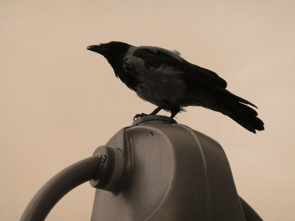 El cuervo vigila Berlín-
