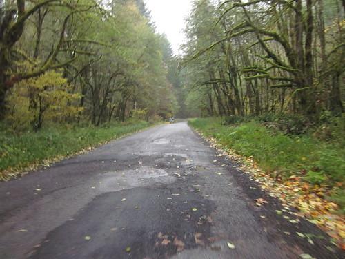 Fern Flat Road
