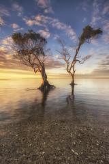 ~ Let's Boogie ~ (Aaron Bishop Photography) Tags: beachmere australia aaronbishopphotography mangroves trees seascape sunrise southeastqueensland ngc nikond600 dancers disco d600 beach clouds goldenhour landscape nikon ocean yellow sky
