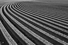 farmer's abstract art (senn_b) Tags: abstract blackandwhite pentax k1 noiretblanc lines curves monochrome pattern minimalism texture geometry outdoor blackwhitepassionaward belgium erbaut makroplanart2100 schwarzweiss carlzeiss hainaut