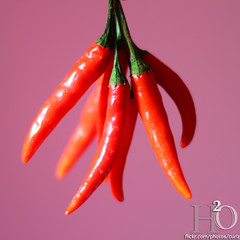 82/365 ,,, (H) Tags: pink red green pepper h2o chilli    cillies      masha3el