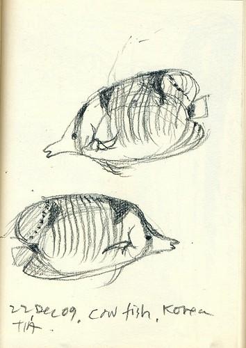 091222_cowfish