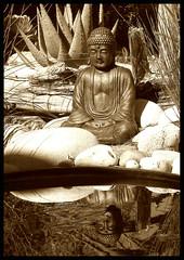 pond buddha