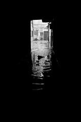 dry perspective (ialla) Tags: venice light blackandwhite bw rain dark calle tide frame venezia pioggia biancoenero acquaalta buio playingwithlight marea 125cm