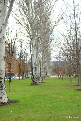 Árboles hibernando en la Vuelta del Castillo