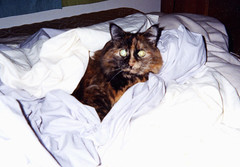 Ida and the Warm Sheets