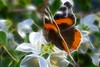 Lepidoptica (view[ ¤ ]finder) Tags: butterfly insect blossom redadmiral lepidoptera prunusavium legacy wildcherry vanessaatalanta afmicronikkor60mmf28d redfieldfractalius thetruthgallery photographyanddigitalartgroup tomfredaphotography