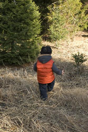 tree_hike