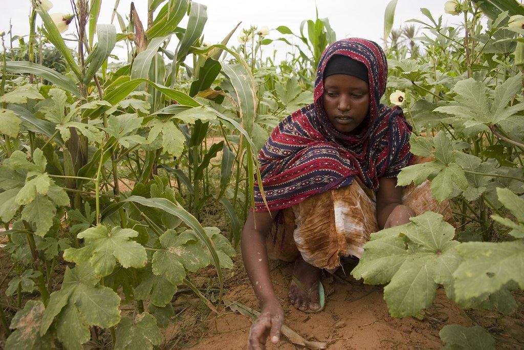 UNHCR News Story: Grameen Trust signs agreement with UNHCR to boost livelihoods programme