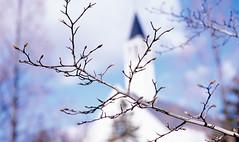 和泉 St.Andrew's Univ.