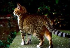 felini (mauropaolocascasi) Tags: cats cat colore natura gatto gatti animali animalidomestici