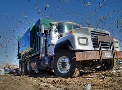 WM Mack RD Roll-off** (FormerWMDriver) Tags: trash dumpster truck garbage box dump can off wm bin management rubbish roll waste refuse ro mack inc rd landfill sanitation axle pusher compactor rolloff 4082 rmodel