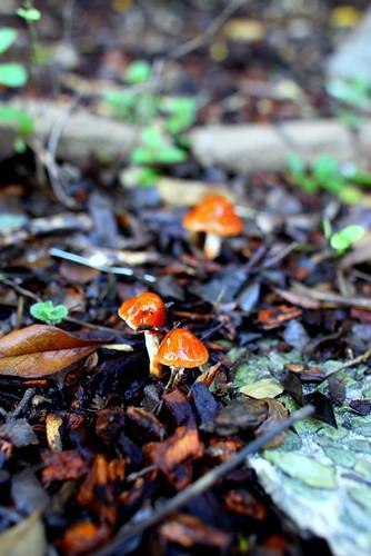 Mushroom :: Backyard