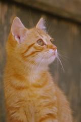 Katinukas (su pastabomis) (Zitute) Tags: katinas