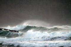 the forest and the sea (Vida Morkunas (seawallrunner)) Tags: storm bc wind britishcolumbia vancouverisland westcoast cwall chestermanbeach