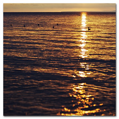 Warmth. One golden evening (s0ulsurfing) Tags: ocean autumn light shadow sea sun sunlight seagulls seascape bird texture beach water bronze island gold golden evening bay coast seaside twilight october warm solitude quiet peace darkness sundown bokeh dusk gull gulls wide warmth wideangle calm coastal serenity vectis isleofwight copper vista coastline ripples isle 2009 goldenhour wight purbeck 10mm totland isleofpurbeck sigma1020 totlandbay s0ulsurfing bokehwhores vertorama crespucular trainedgulls