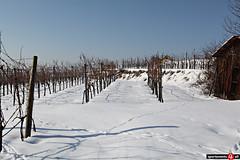 Schnee und Eis rund um Langenlois (Sportevents4all - www.se4a.at) Tags: abendrot langenlois winterlandschaft weinberge weingrten grafenegg