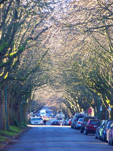 treelinedstreet-van