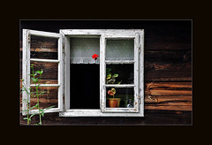 The Open Window (Beatrycze.) Tags: birthday wood old red summer flower window last countryside rust paint open poland polska countryhouse okno urodziny ethnographicmuseum kwiat wies xixcentury wielkopolska muzeumetnograficzne nikond90