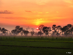 Sunset (Photo Pas'ion) Tags: pakistan sunset orange field fire panasonic punjab abdul sialkot wajid photographypassion awajid saedpur