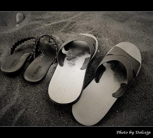 海灘的好夥伴