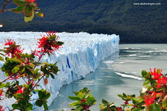 Glaciar Perito Moreno Patagonia Argentina Gelo Hielo Geleira Ice Flores Flower