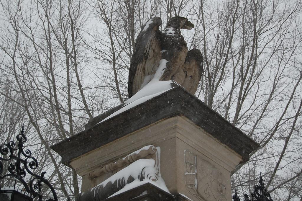 Eagle vigilant