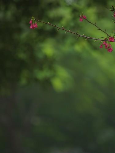 葉子都開始要發芽了