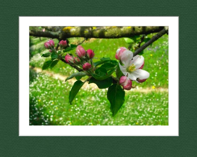 Travail sur une photo de fleur 4354128918_f69c037da6_o