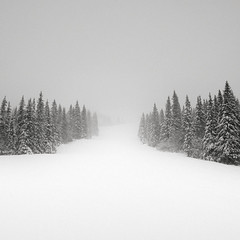 Spectators (Maria Stromvik) Tags: winter mist mountain snow cold tree fog pinetree landscape woods sweden empty hill peaceful calm minimal gran lonely void snowfall vanishing sn slope jmtland snowscape fjllen winterscape disappearing fjll duved