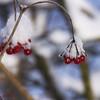 on ice (GdeB fotografeert) Tags: drenthe borger ees landvanbartje wintersbeeld gdebfotografeert januari2010