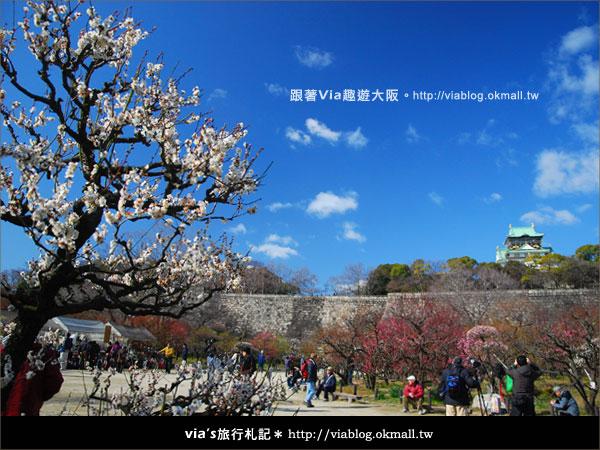 【via關西冬遊記】大阪城天守閣!冬季限定:梅園梅花盛開7