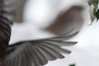 filled with love for the world (nosha) Tags: winter sky usa snow abstract cold bird nature beautiful beauty birds newjersey bokeh wing nj feather mercer organic february f56 blizzard avian mercercounty pennington 2010 lightroom 105mm 105mmf28 blackmagic artfart nosha 11000sec nikond300 snopocalypse 11000secatf56 snomaggedon